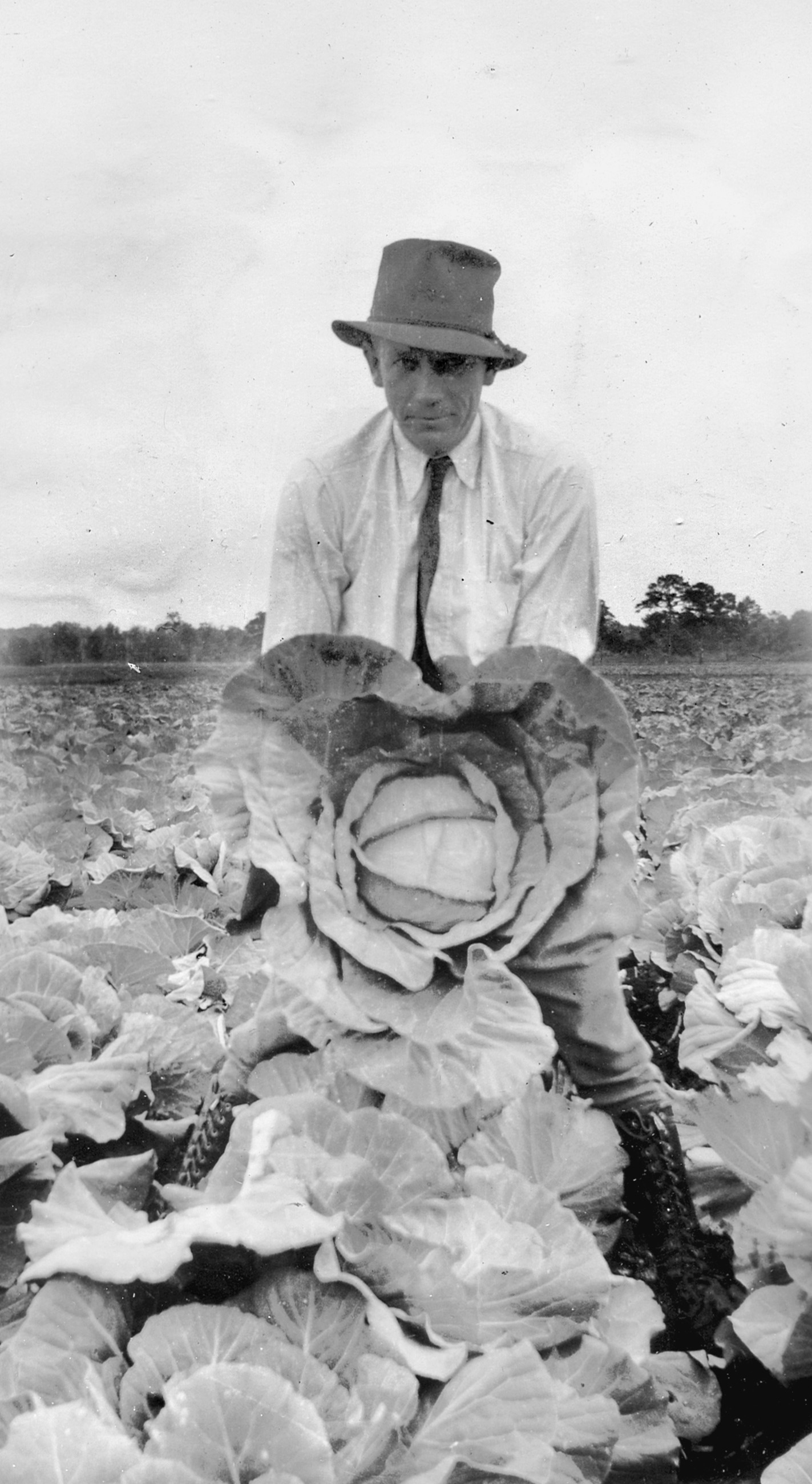 Boone Hall Plantation:  Picking Cabbages