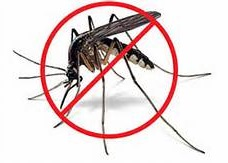 Image result for no mosquito